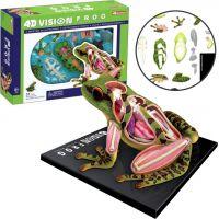 4D HM studio Anatomický model Žába 2