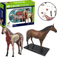 4D HM studio Anatomický model Kůň 2