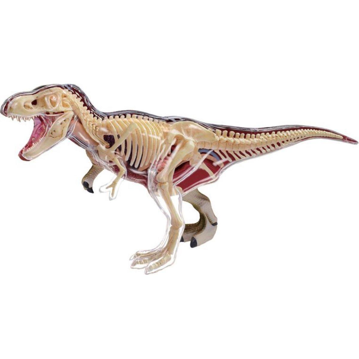 4D HM Studio Anatomický model T-Rex