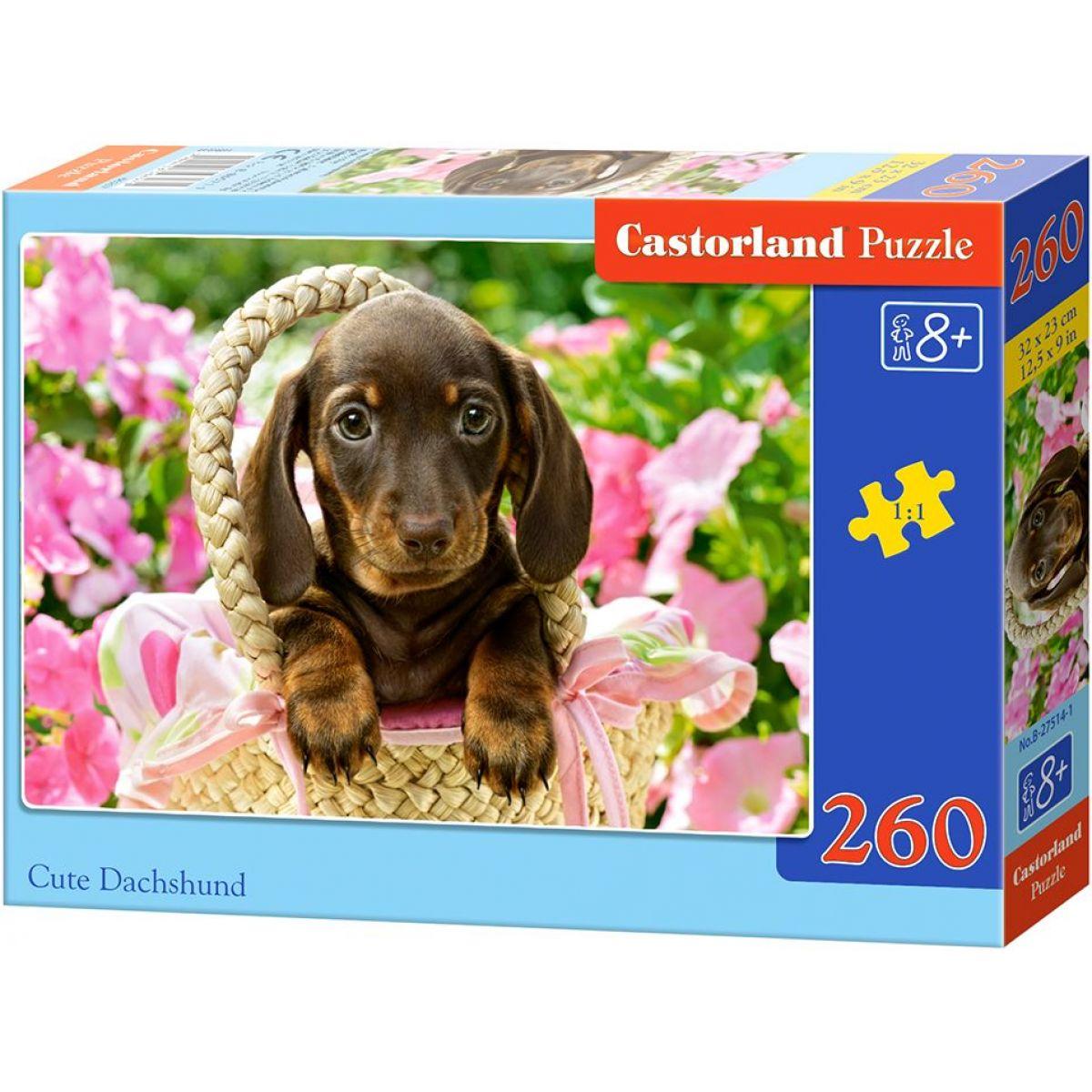 Castorland Puzzle Tri šedivá mačiatka 260 dielikov