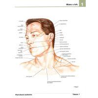 Netterův anatomický atlas člověka - Frank H. Netter 2
