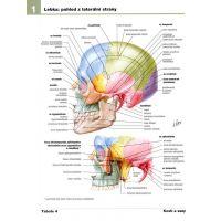 Netterův anatomický atlas člověka - Frank H. Netter 3