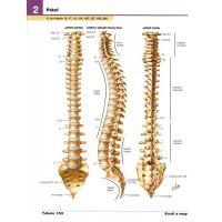Netterův anatomický atlas člověka - Frank H. Netter 4
