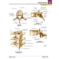 Netterův anatomický atlas člověka - Frank H. Netter 5