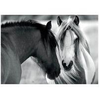 Dino Puzzle Čierny a biely kôň 1000 dielikov 2