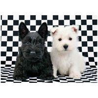 Dino dva pejsci černobílé 47x33cm 500 dílků v krabici 33,5x23x3,5cm 2
