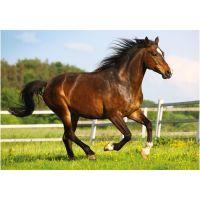DINO 500 dílků Kůň ve výběhu 2