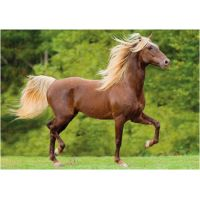 DINO 300 dílků Kůň zlatohřívák XL 2