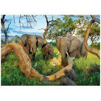 DINO 1000 dílků Sloni z Botswany 2