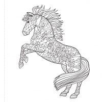 Kone maľovanky 3