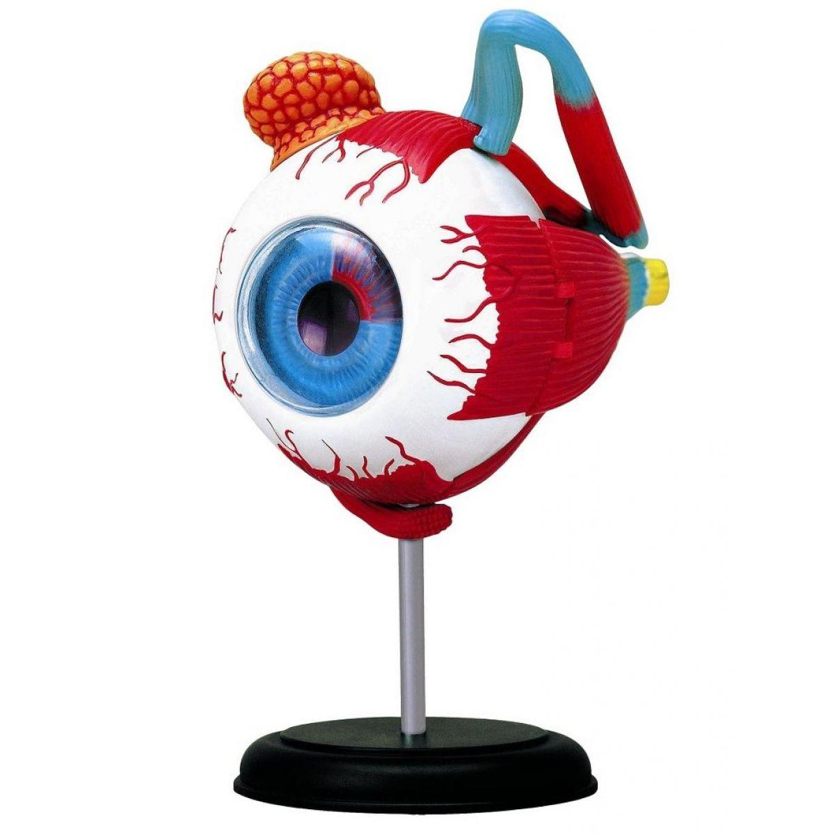 HM Studio Anatomie člověka oko - Poškodený obal