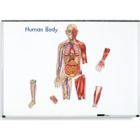 Learning resources Oboustranné magnetické lidské tělo