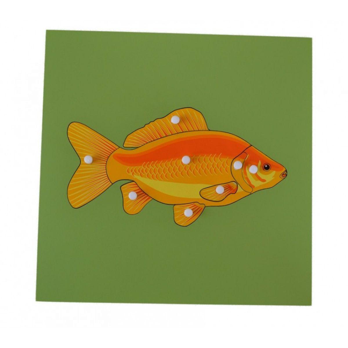 Montessori Vkladacie puzzle s kostrou ryby