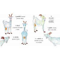 Albatros Pažravý koza 4