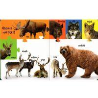 Obrázková knížka Zvířátka z lesa 3