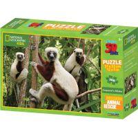 Puzzle 3D lemur 10 dílků