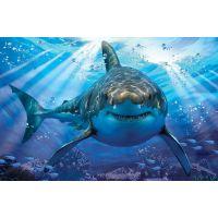 Lamps 3D Žralok 500 dílků 2
