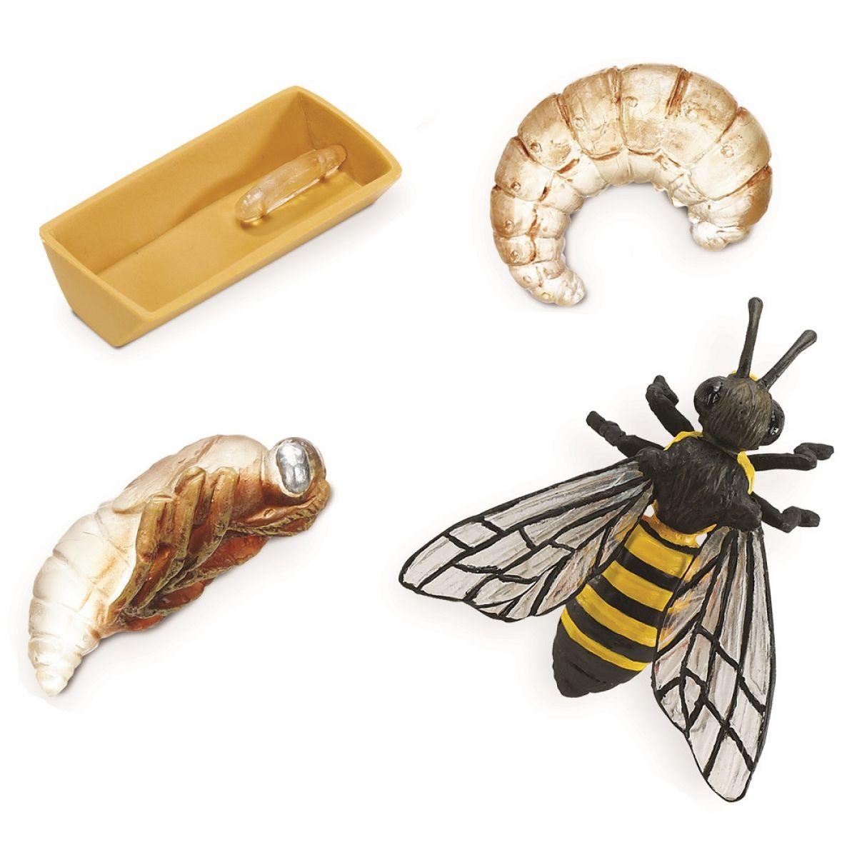 Safari Ltd Životný cyklus Včela