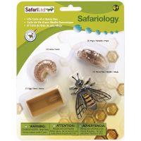 Safari Ltd Životný cyklus Včela 3