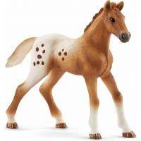 Schleich 42433 Set appalosští kone a tréningové príslušensta 4