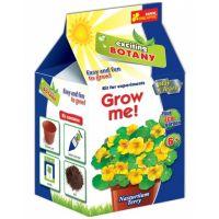 Vypěstuj si květinu Lichořeřišnice